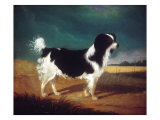 King Charles Spaniel Posters by  Porter Design