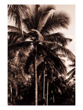 Sepia Palm 2 Prints by  Porter Design