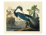 Louisiana Heron Plate 217 Prints by  Porter Design