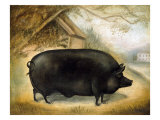 Large Black Pig Giclee Print by  Porter Design