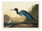 Blue Crane or Heron Plate 307 Giclee Print by  Porter Design
