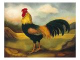 Vieux coq anglais Affiches par  Porter Design