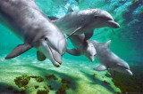 Dolfijnen Poster