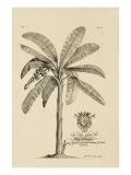 Porter Design - Banana Tree Digitálně vytištěná reprodukce