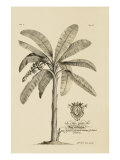 Banana Tree Print by  Porter Design