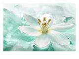 Botanica Azure II Giclee Print by Jeanne Michel