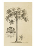 Papaya Tree Giclee Print by  Porter Design