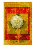 Camellia Giclee Print by Doug Landreth