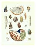 Plate 5 Giclee Print by Porter Design 