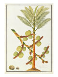 Sago Palm Giclee Print by  Porter Design