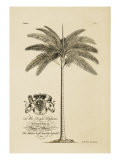 King Palm Giclee Print by  Porter Design
