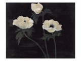 Midnight Anemones I Prints by Marysia Burr