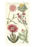 Geraniaceae 2 Prints by  Porter Design
