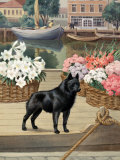 Schipperke Dog Guards Canal Boats in a Belgian Town Photographic Print by Walter Weber