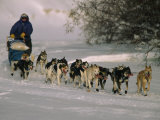 Dogs Pull a Sled across Snow Photographic Print by Nick Norman
