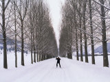 Cross Country Skier Skates on a Tree-Lined Road Photographic Print by Gordon Wiltsie