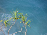 Trees Overlooking the Ocean Photographic Print by John Burcham