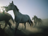 Horse Herd on a Farm in Ukraine Photographic Print by Sisse Brimberg