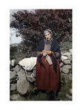 Woman Knits under a Fuchsia Tree Photographic Print by Clifton R. Adams