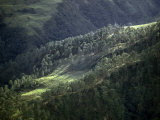 Terraced Fields Climb into a Forest in the Himalayan Foothills Photographic Print by Gordon Wiltsie