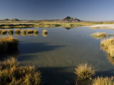 Saline Ponds Near Tecopa, in the Mojave Desert Photographic Print by Gordon Wiltsie