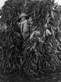 Woman Peers Out from a Large Group of Cornstalks Photographic Print by Clifton R. Adams