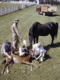 Workers Hold a Colt While the Veterinarian Gives it Castor Oil Photographic Print by B. Anthony Stewart