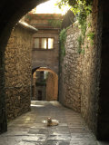 Cat Resting in the Middle of a Cobblestone Street in Gubbio, Italy Photographic Print by  xPacifica