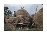 Couple of Peasants Stack Hay Photographic Print by Clifton R. Adams