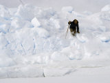 Inuit Hunter Crosses a Huge Pressure Ridge on the Frozen Ocean Photographic Print by Gordon Wiltsie