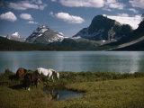 Horses Graze in a Lakeside Meadow in the Canadian Rockies Fotografisk tryk af Walter Meayers Edwards