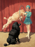 French Poodle Jumps Through a Hoop During a Circus Performance Photographic Print by Walter Weber