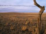 Barbed Wire Fence by Dry Creek Road Photographic Print by Gordon Wiltsie