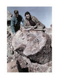 Man and a Woman Look at a Petrified Tree in Arizona Photographic Print by Clifton R. Adams