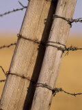 Gate Posts Join a Barbed Wire Fence by Dry Creek Road Photographic Print by Gordon Wiltsie