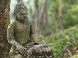 Tranquil Seated Buddha Statue in Bali's Lush Tropical Forest Photographic Print by  xPacifica