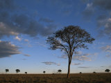 Dusk over the Cerrado, a Vast Savanna in Brazil's Central Highlands, Photographic Print
