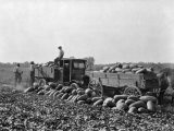 Workers Gather Watermelons for Northern Markets Photographic Print by Edwin L. Wisherd