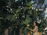 Woman Stands for a Photo in Front of Breadfruit Plants Photographic Print by Edwin L. Wisherd