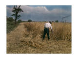 Man Mows Stands of Grain by Hand Photographic Print by Clifton R. Adams