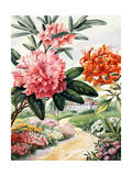 Painting of Catawba Rhododendron and Flame Azaleas Giclee Print by Else Bostelmann