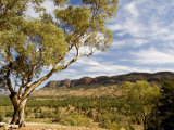Eucalyptus Tree Stands on Top of Hill with Flinders Ranges in Back Photographic Print by Brooke Whatnall