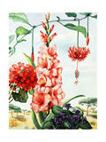 Portrait of Flowers Native to Africa Giclee Print by Else Bostelmann