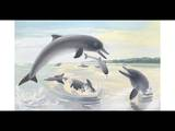 Guiana River Dolphins Can Live in Salt or Fresh Water Giclee Print by Else Bostelmann