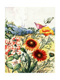 Clarkia, Blanket Flowers, California Poppies, and Lupines Giclee Print by Else Bostelmann