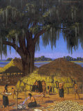 Choctaws in Louisiana Bayou Country Harvest Corn, Photographic Print