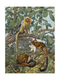 Painting of Marmosets in the Jungle Canopy Photographic Print by Elie Cheverlange