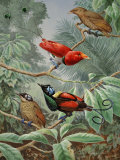 Two King Birds of Paradise Perch Above Two Wilson's Birds of Paradise Photographic Print by Walter Weber