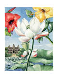 Rose-Of-China Hibiscus, East Indian Lotus, and Yellow Hibiscus Giclee Print by Else Bostelmann