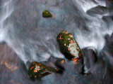 Fast Moving Creek Swirling around Moss-Covered Stones Photographic Print by White & Petteway